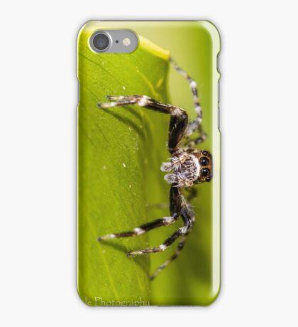 Morning Spider iPhone Case/Skin