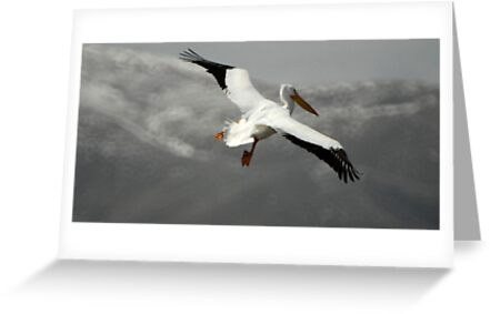 Flight - American White Pelican by Ryan Houston