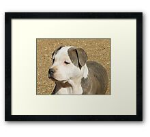 A Puppy Called Ginger Sparkles Framed Print
