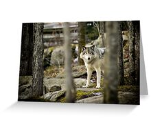 Timber Wolf Between the Trees Greeting Card