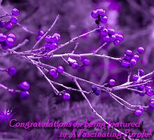 A Fascinating Purple Banner by maxy