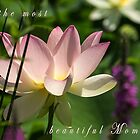 Lotus in the Garden by Dawn Crouse