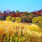 Autumn in High Park (2008...! by sendao
