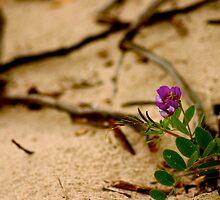 Dune Flower by Nelson  Ramm