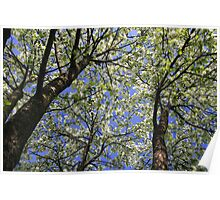 Under the Crabapple Tree Poster