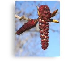 The Fine Beauty of Spring Canvas Print