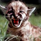 Mountain Lion cub by Larry  Grayam