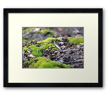 A Mossy Existence Framed Print