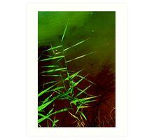 Waterside Plant Art Print