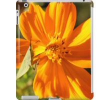 A Twist on Orange iPad Case/Skin