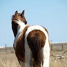 Assateague Ponies by kimbarose