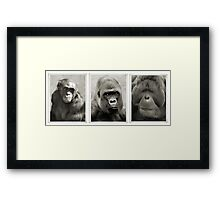 Great Apes Tribute. Framed Print