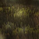 Canadian Forest ... The woods are lovely, dark, and deep by Christine Till  @    CT-Graphics