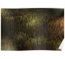 Canadian Forest ... The woods are lovely, dark, and deep Poster
