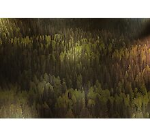 Canadian Forest ... The woods are lovely, dark, and deep Photographic Print