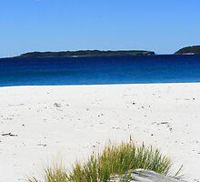 Grass detail I  Captains Beach Jervis Bay by danav