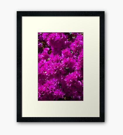 Begonia Flowers Framed Print