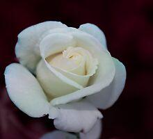 With Love Always by AlexMac