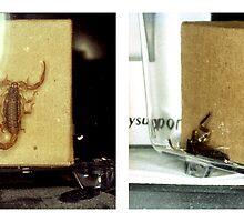 Scorpionidae by klavaza