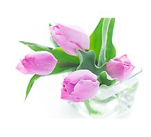 Pink tulips bouquet in vase isolated on white background Photographic Print