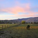Autumn Dawn by Jon  Johnson