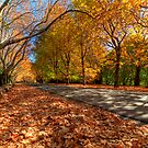 Mount Wilson The Glorious Colours of Autumn NSW Australia by DavidIori