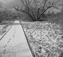 Path by Jon  Johnson