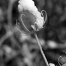 Snowflower by Jon  Johnson