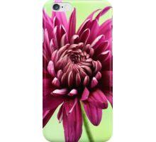 Purple chrysanthemum iPhone Case/Skin