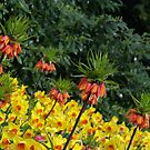Sence for a flowers... by Vincent Dimitrov