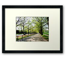 Tree Lined Avenue Framed Print