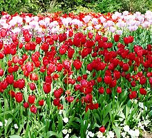 Tulip Bed by Braedene