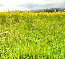 On the grass by Scott Mitchell
