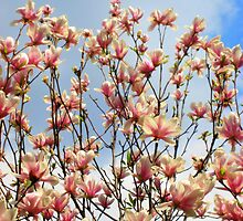 Sky Blossoms by girljo818