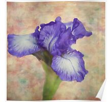 Flower Art - The Meaning Of An Iris Poster