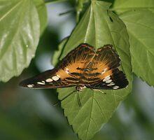 Wings of desire by helenrose