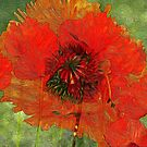 Poppy Field 14  by Lynda Lehmann