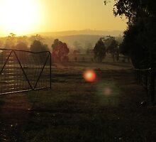 Golden Morning by AlisonKate