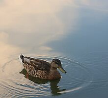 Ripples by Lyle Hatch