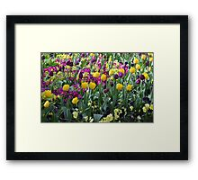 Tulips in Hyde Park #2 Framed Print