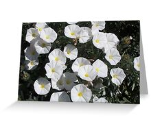 White Flowers #2 Greeting Card