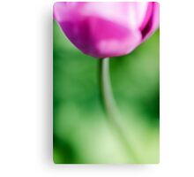 Tulip in abtract Canvas Print