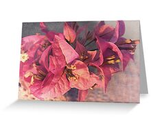branch with bougainvillea flowers  Greeting Card