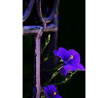The Color Purple Photographic Print