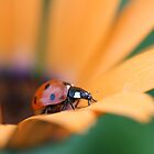 Summer colors by Isabelle Lafrance