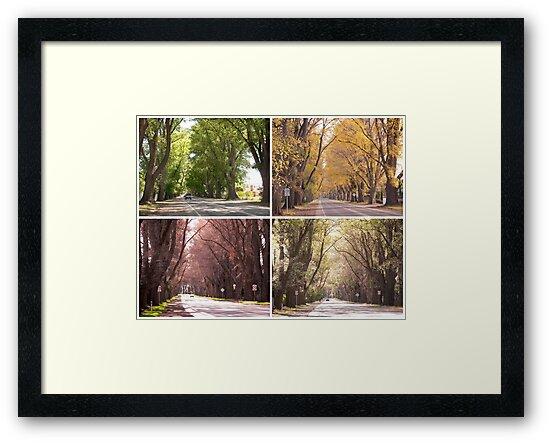Seasons of The Avenue - Bacchus Marsh by Anne van Alkemade