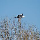 Flight of the Heron by dougie1