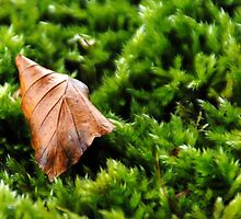 Leaf on Moss by Photography by Mathilde