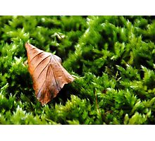 Leaf on Moss Photographic Print