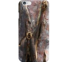 cicadas chrysalis hatched on gumtree bark iPhone Case/Skin